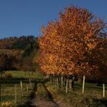 automne-2010